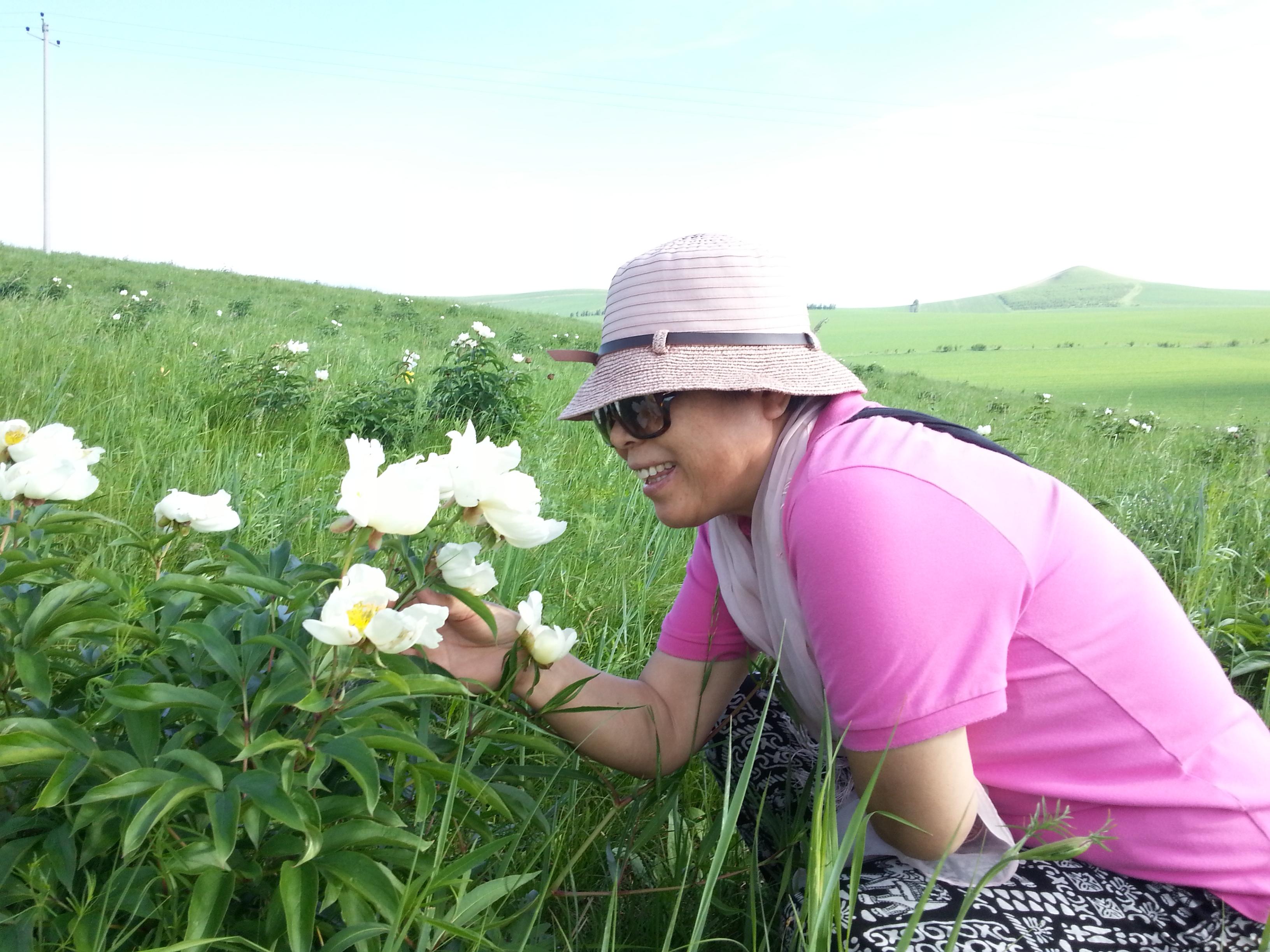广金钱草原植物
