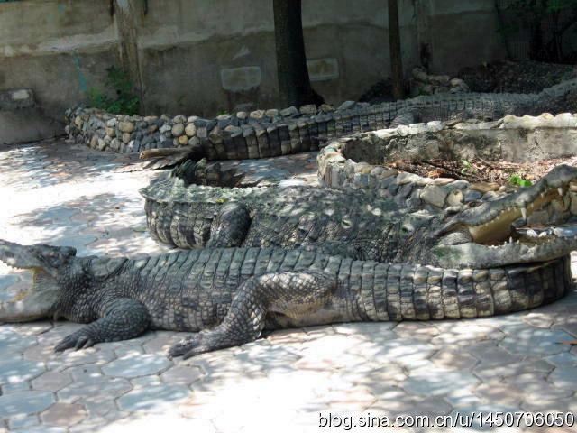 鳄鱼表演惊险万分,是这里的招牌节目。人鳄相斗表演在表举世闻名的鳄鱼表演场内举行,身穿红色衣裤的表演者在此定时作驯鳄、戏鳄、斗鳄等各种惊险的表演。经过驯化的鳄鱼会向游客做出各种动作,有时驯鳄人坐在鳄鱼背上,鳄鱼还时时回首与驯鳄人亲吻。每年鳄鱼潭接待游客逾百万人次,许多到泰国访问的国家元首和贵宾都要到此参观。人鳄表演时间平常日: 9:00 10:00 11:0013:00 14:00 15:00 16:00 假日: 9:00 10:00 11:00 12:0013:00 14:00