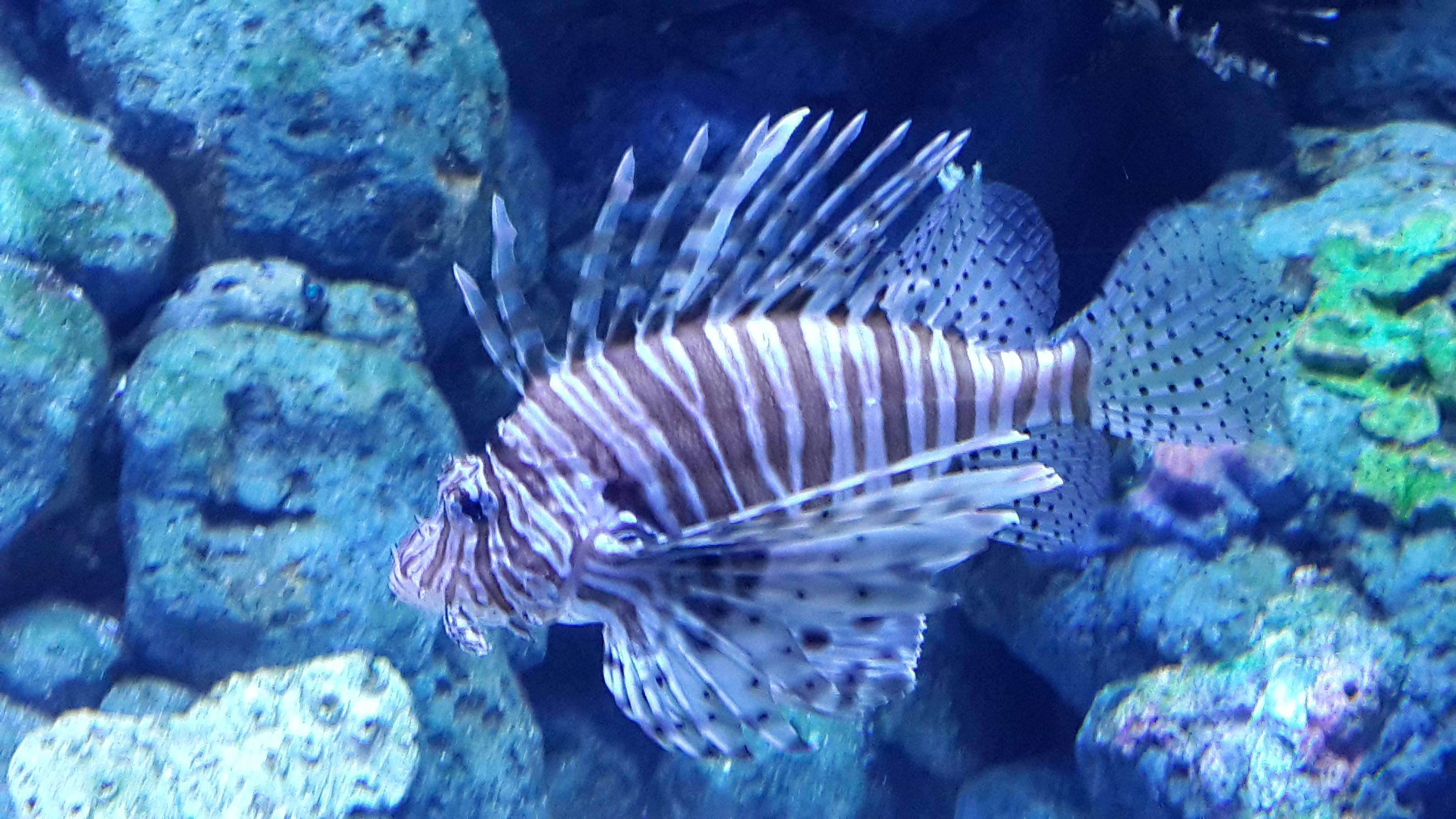 壁纸 动物 海底 海底世界 海洋馆 水族馆 鱼 鱼类 3264_1836