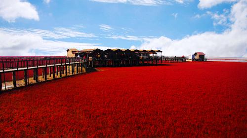 盘锦红海滩风景区