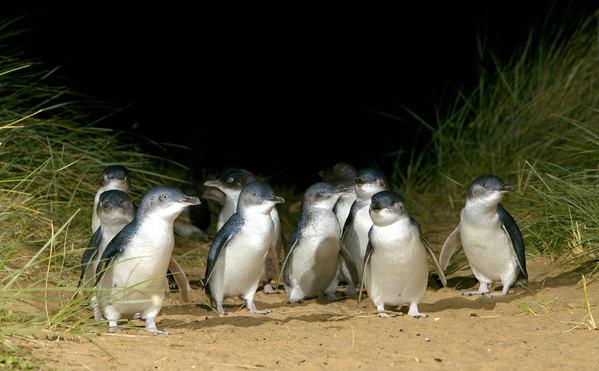 追逐野生动物的脚步 环游澳大利亚