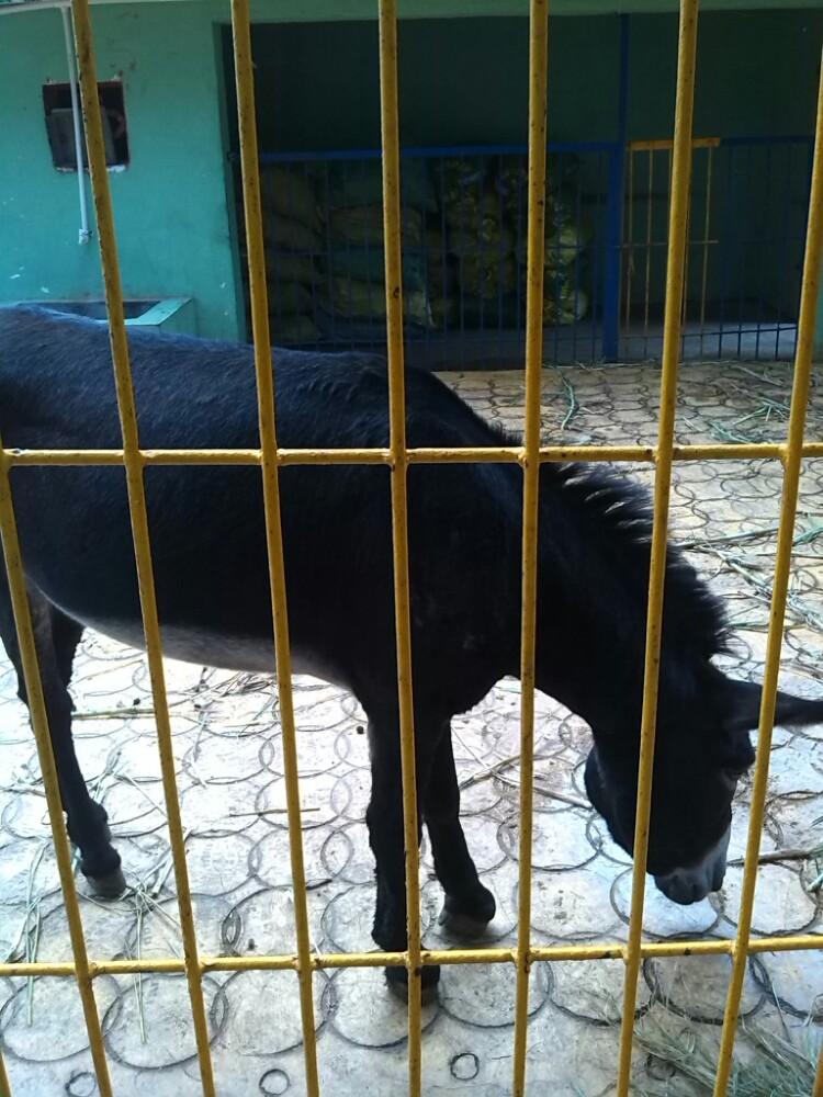 寸金桥动物公园