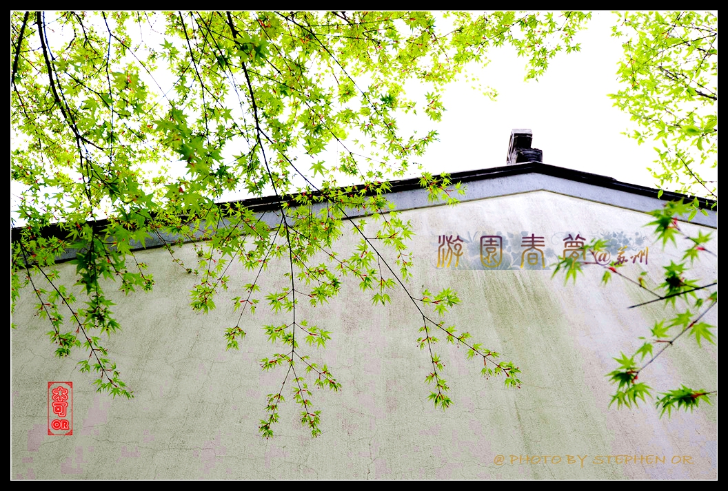 拙政园窗花手绘图