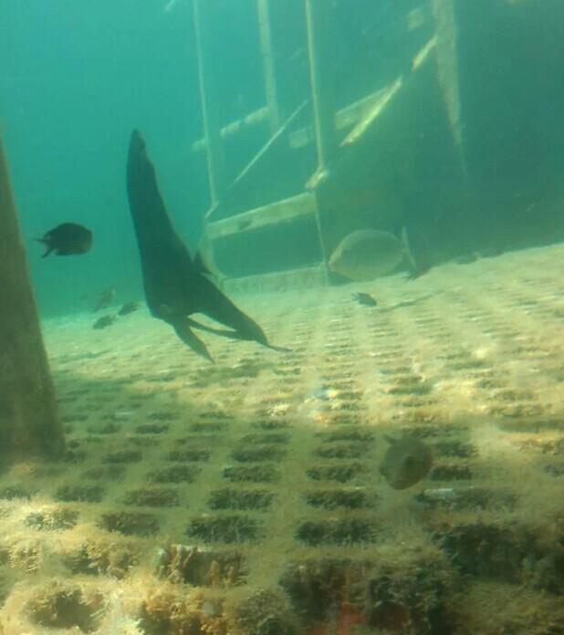 废旧光盘手工制作海底动物图片