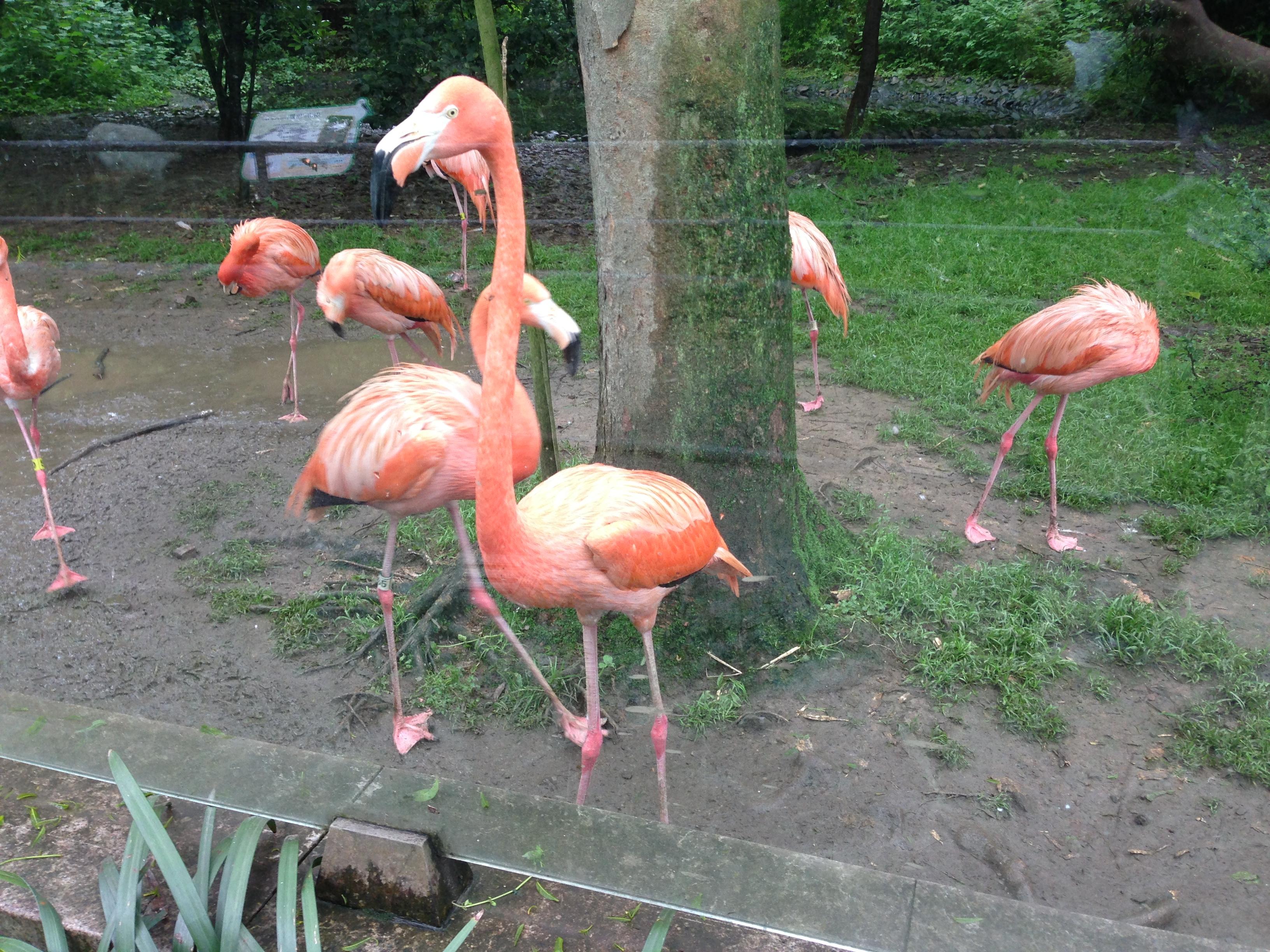 【携程攻略】浙江杭州动物园适合朋友出旅吗
