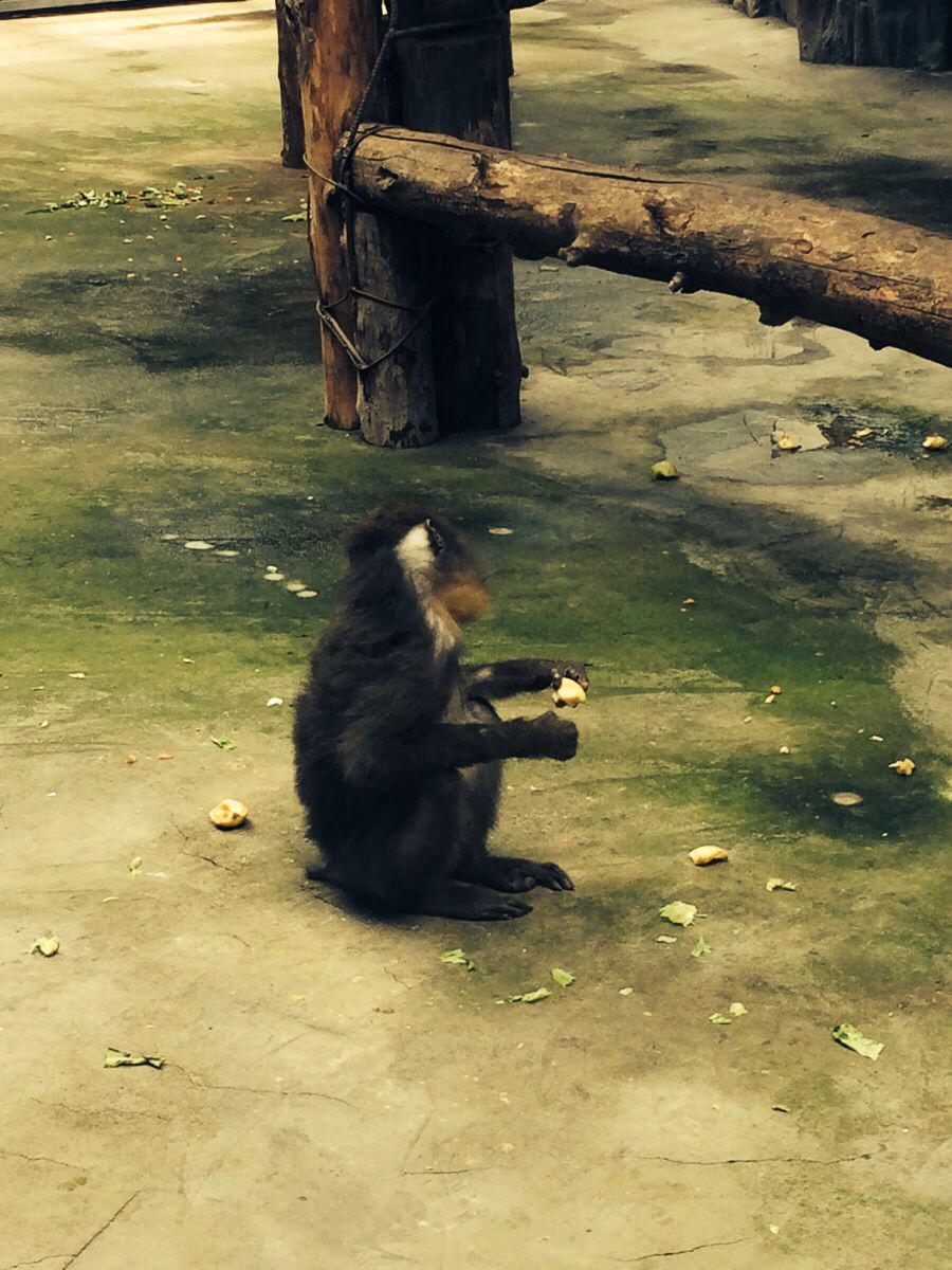 鄂尔多斯动物园