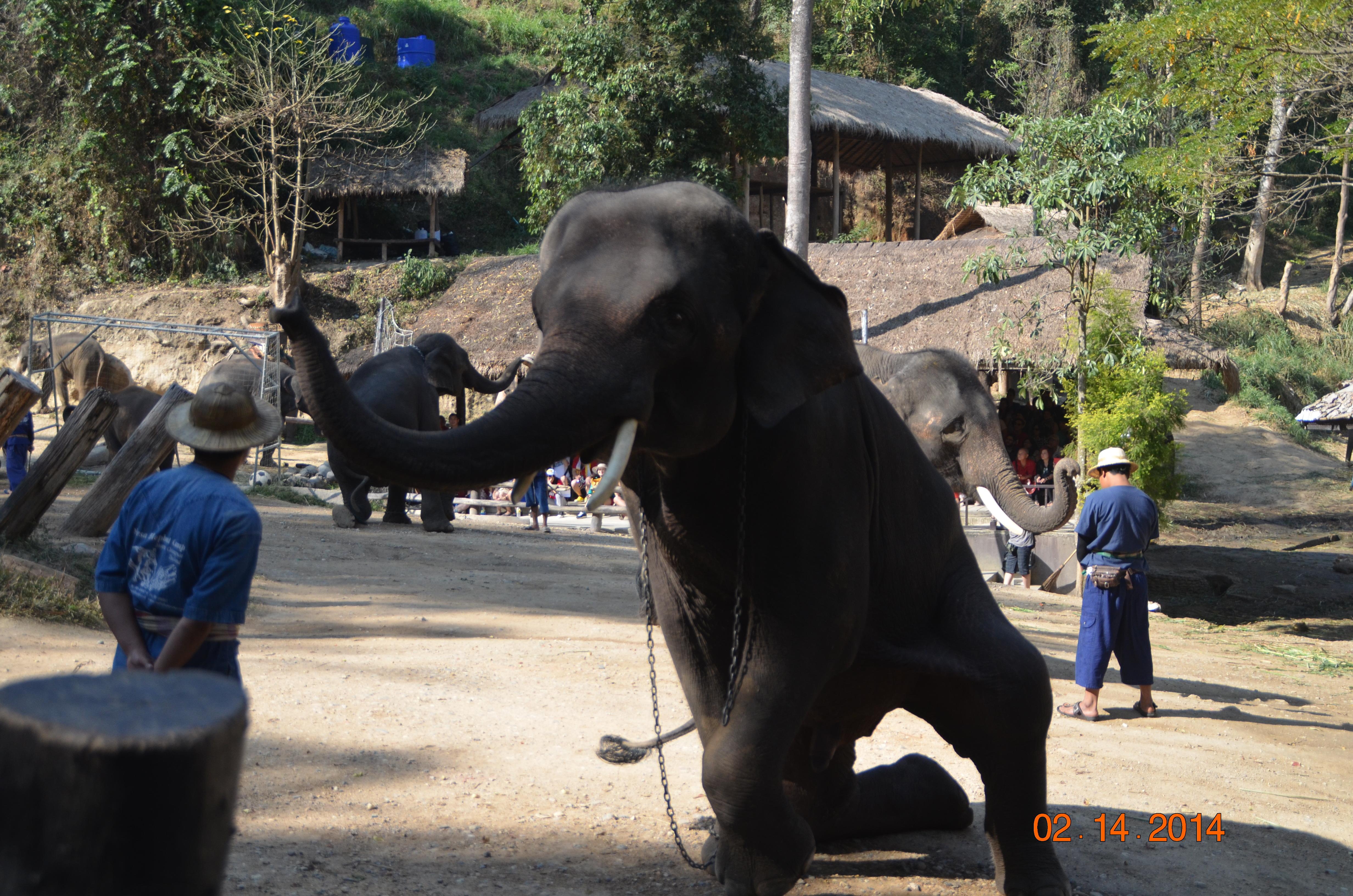 大象 动物 4928_3264
