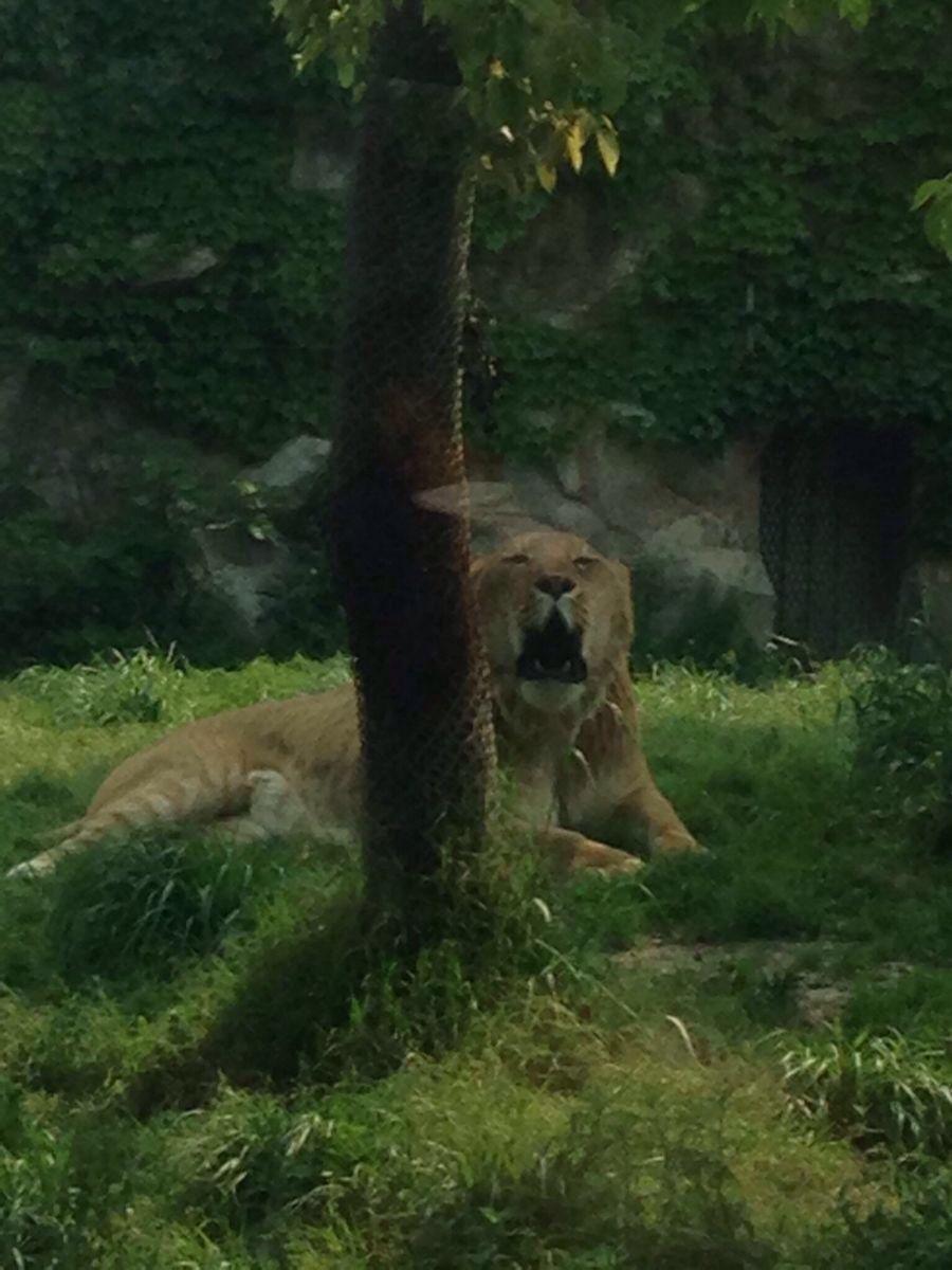 目的地 中国 上海 景点 上海野生动物园