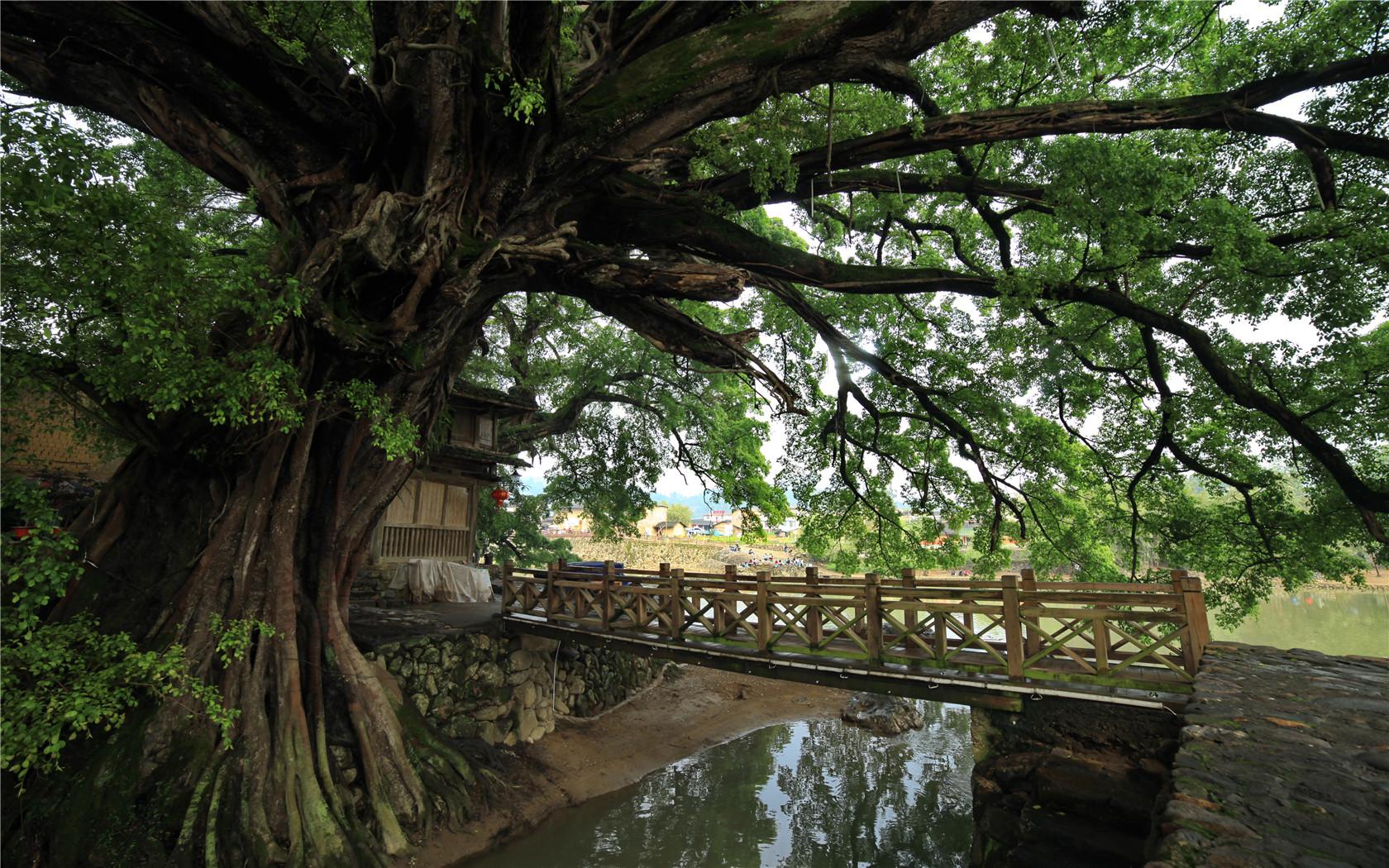 历史七年级下册结构树