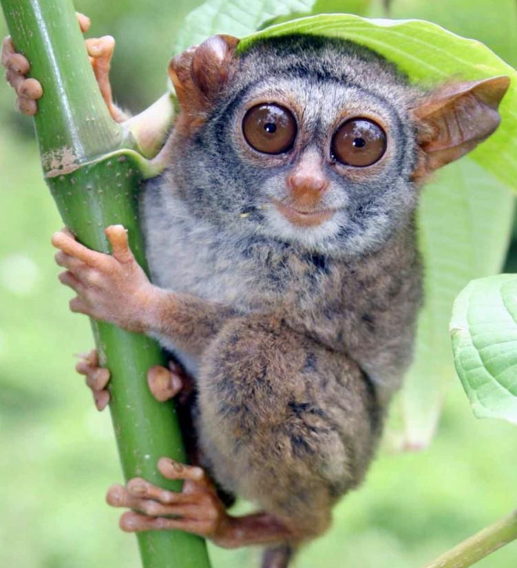 眼镜猴游客中心好玩吗