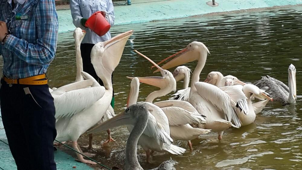 广州鳄鱼公园,广州广州鳄鱼公园攻略/地址/图片/门票
