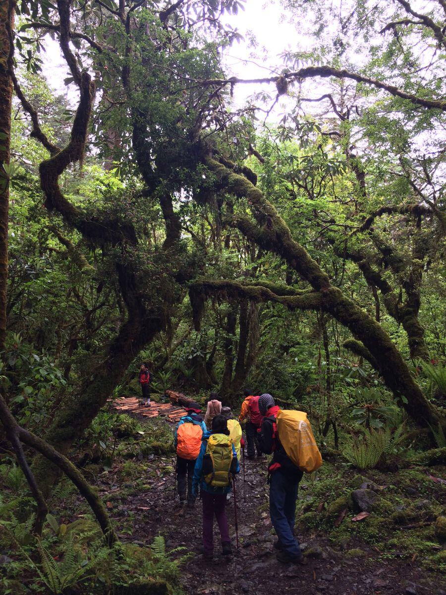 徒步墨脱穿越原始森林图片