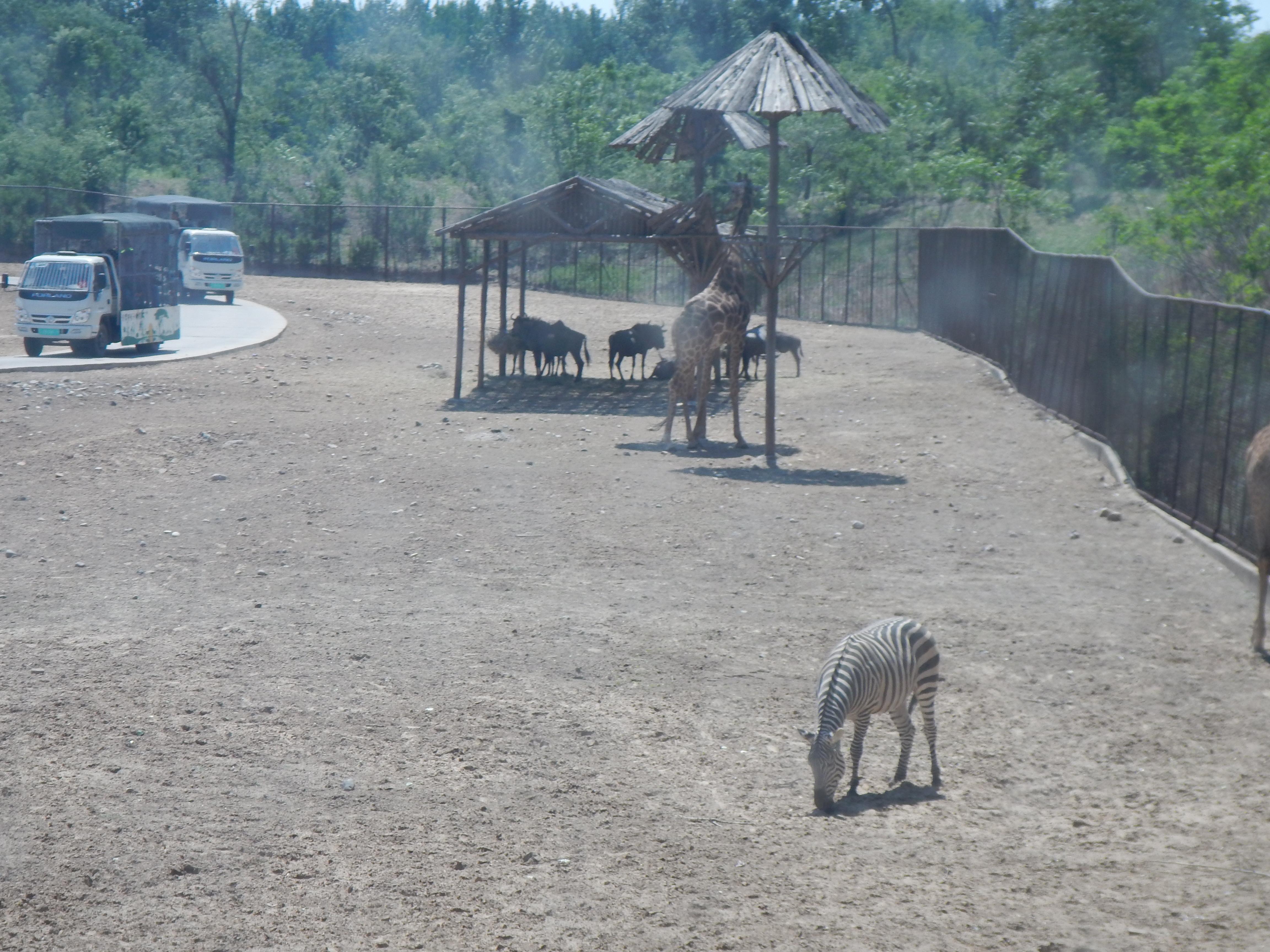 野生动物乐园----北京野生动物园游记