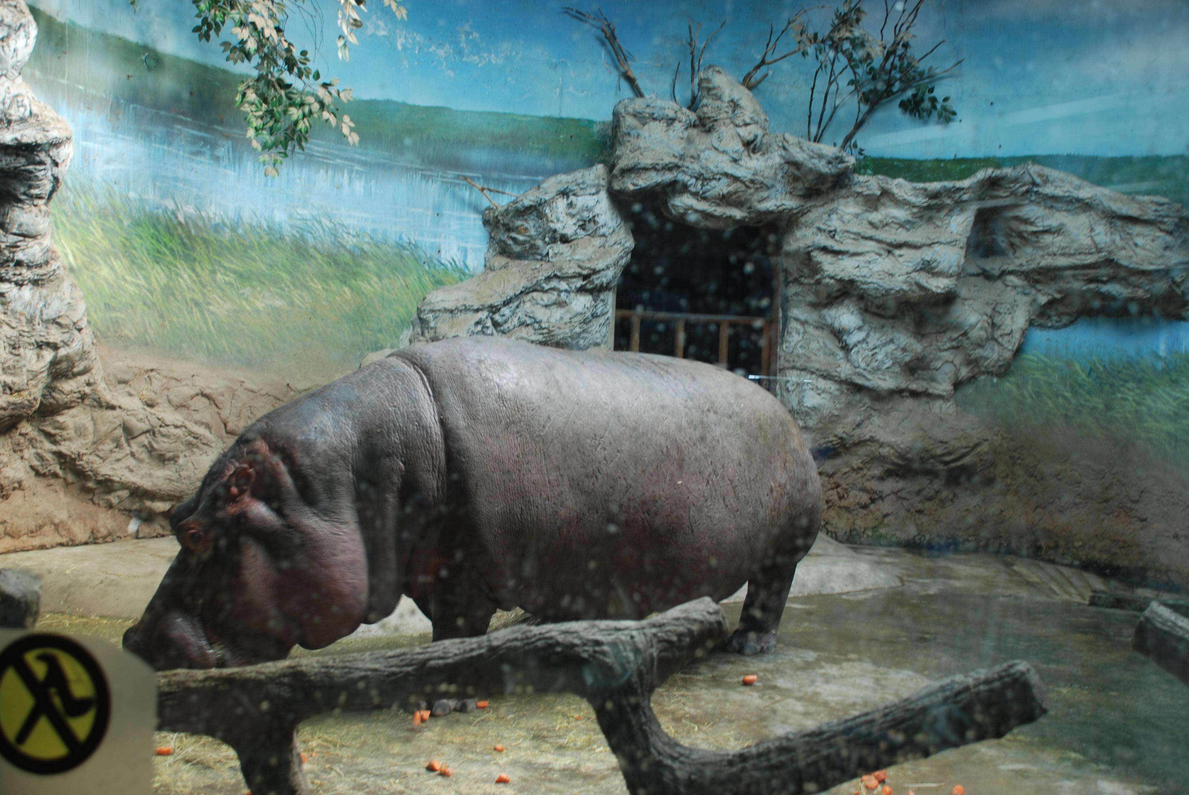 北京动物很多!景色不错!动物园北门就是北京海洋馆!