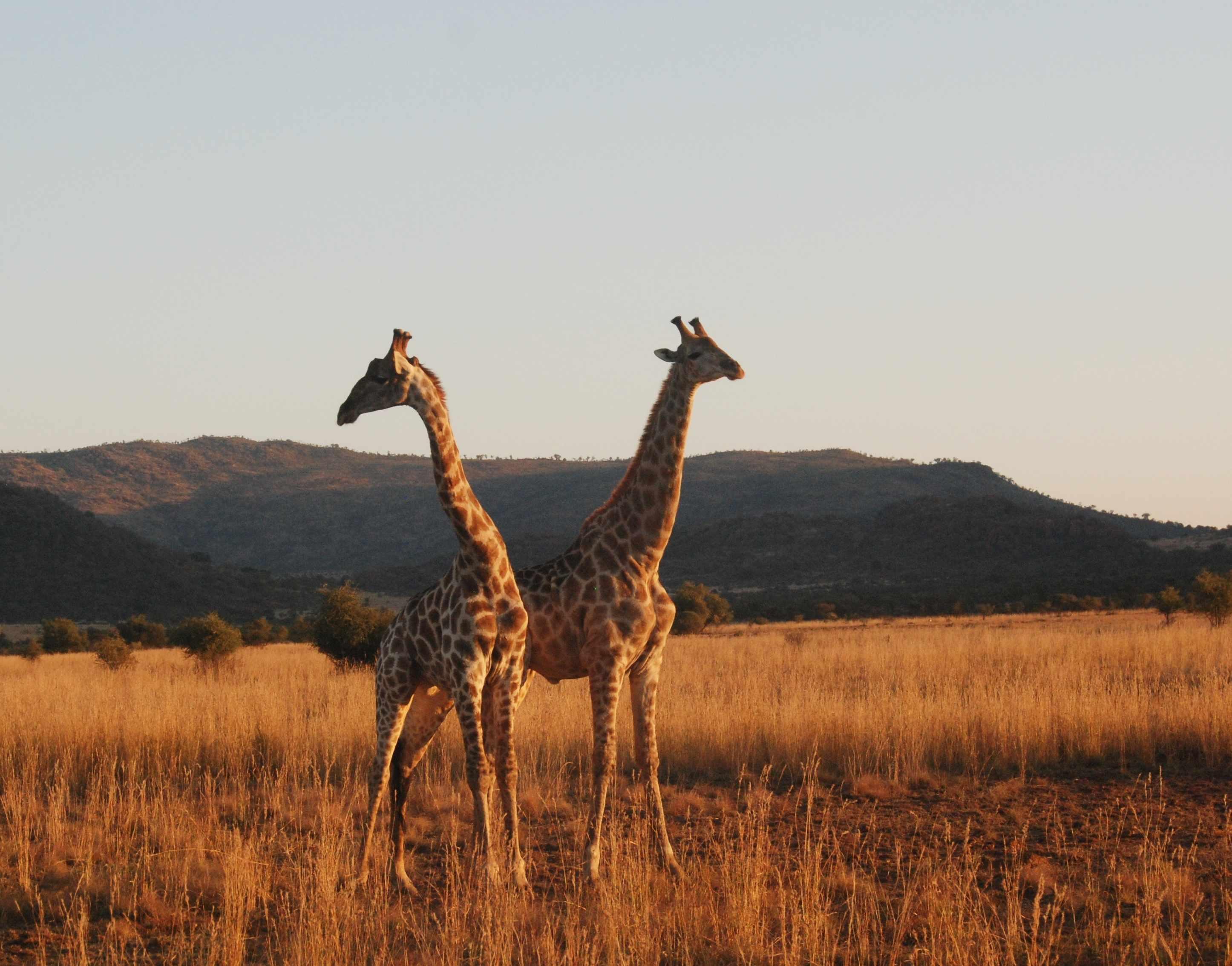 坐着敞篷观光车看着非洲的风景真是很美妙