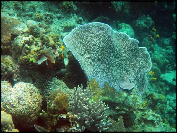 壁纸 动物 海底 海底世界 海洋馆 水族馆 鱼 鱼类 599_451