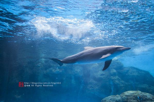 壁纸 动物 海洋动物 鲸鱼 桌面 599_399