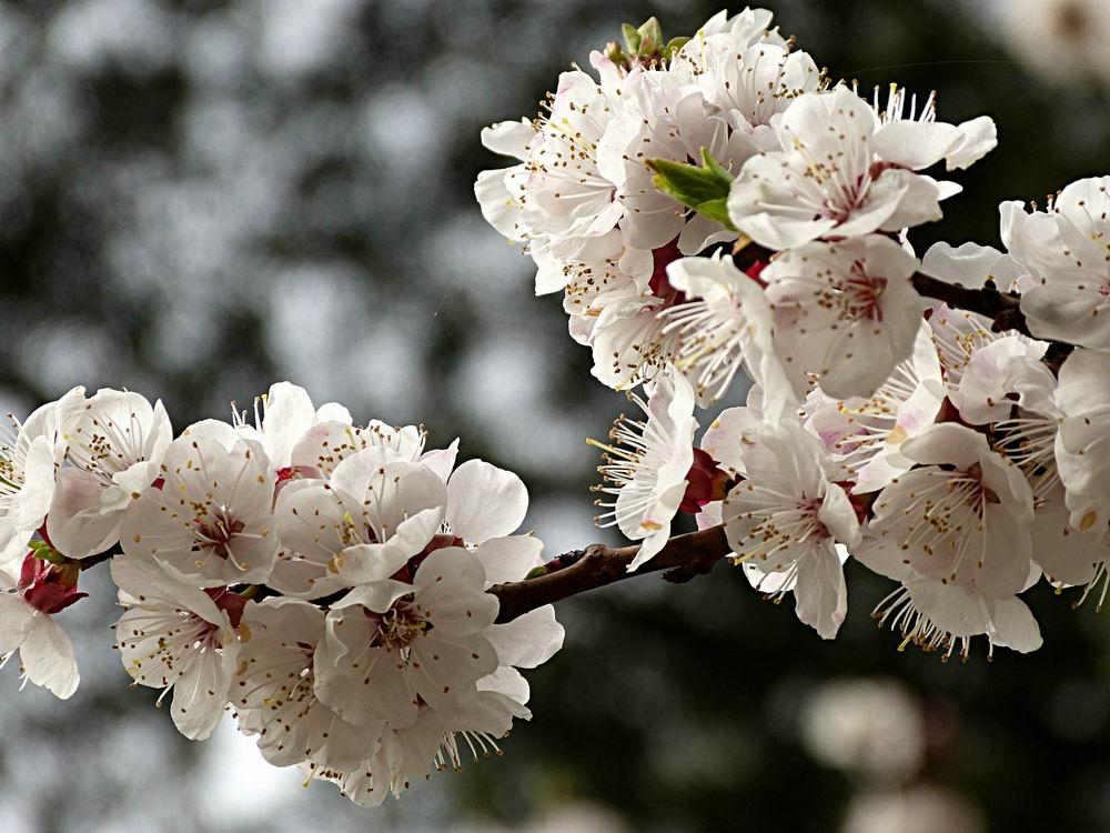 大连春天开的花