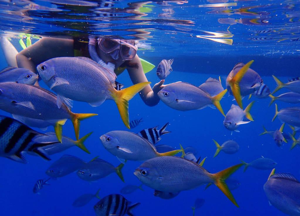 壁纸 海底 海底世界 海洋馆 水族馆 桌面 1023_737