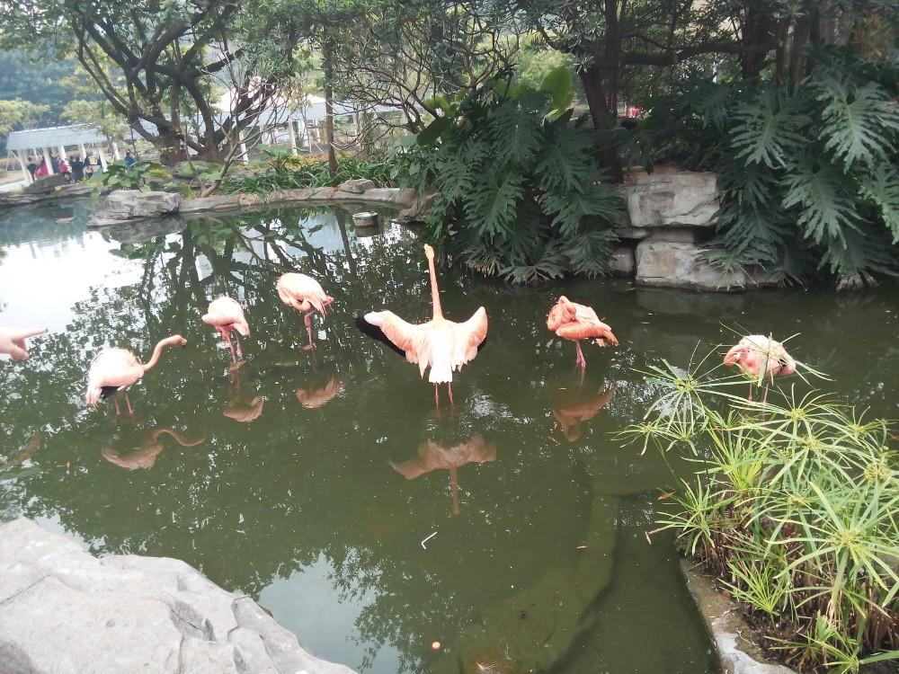广州动物园, - 游记攻略【携程攻略】