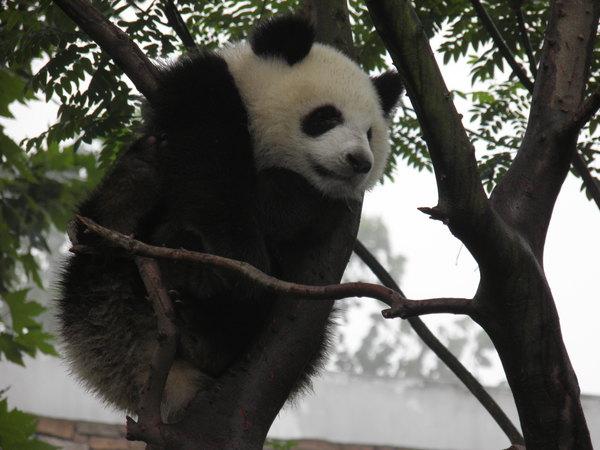 我们一边谈论着小熊猫先生的可爱,一边慢腾腾的起床,洗漱.