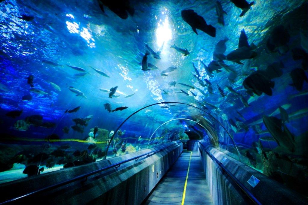 圣亚海洋世界