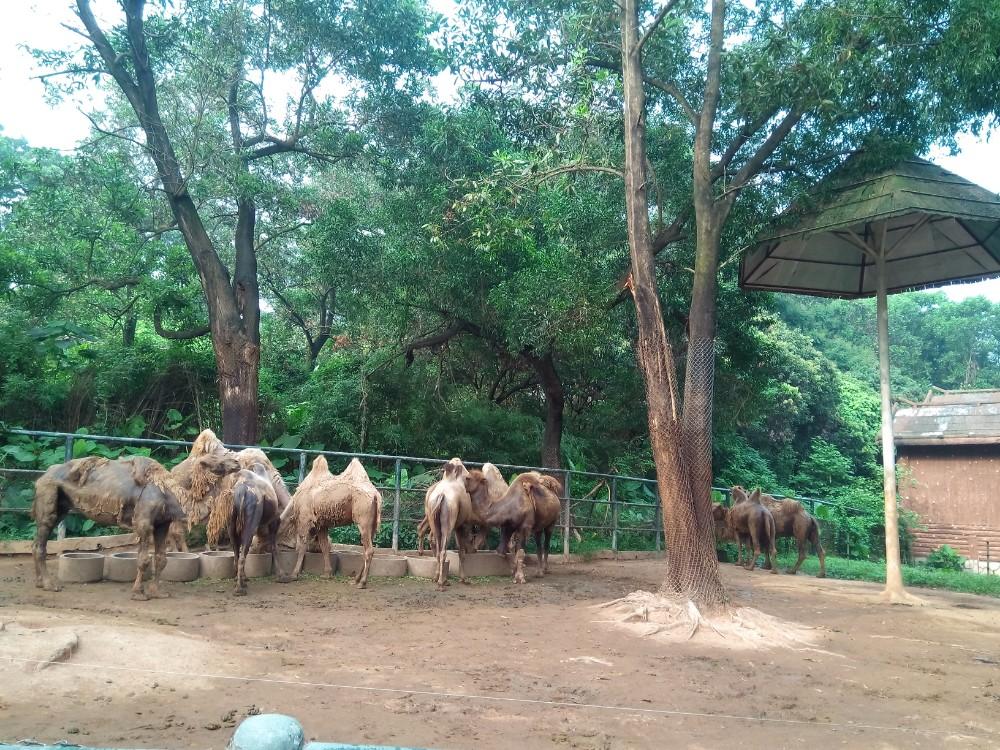 深圳动物园游玩|深圳游记-携程旅行