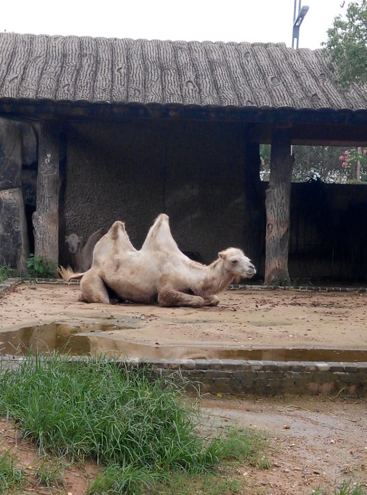 好多动物都很要夏眠