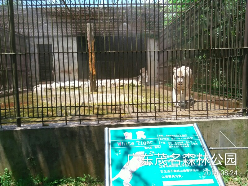 茂名森林公园,茂名茂名森林公园攻略/地址/图片/门票