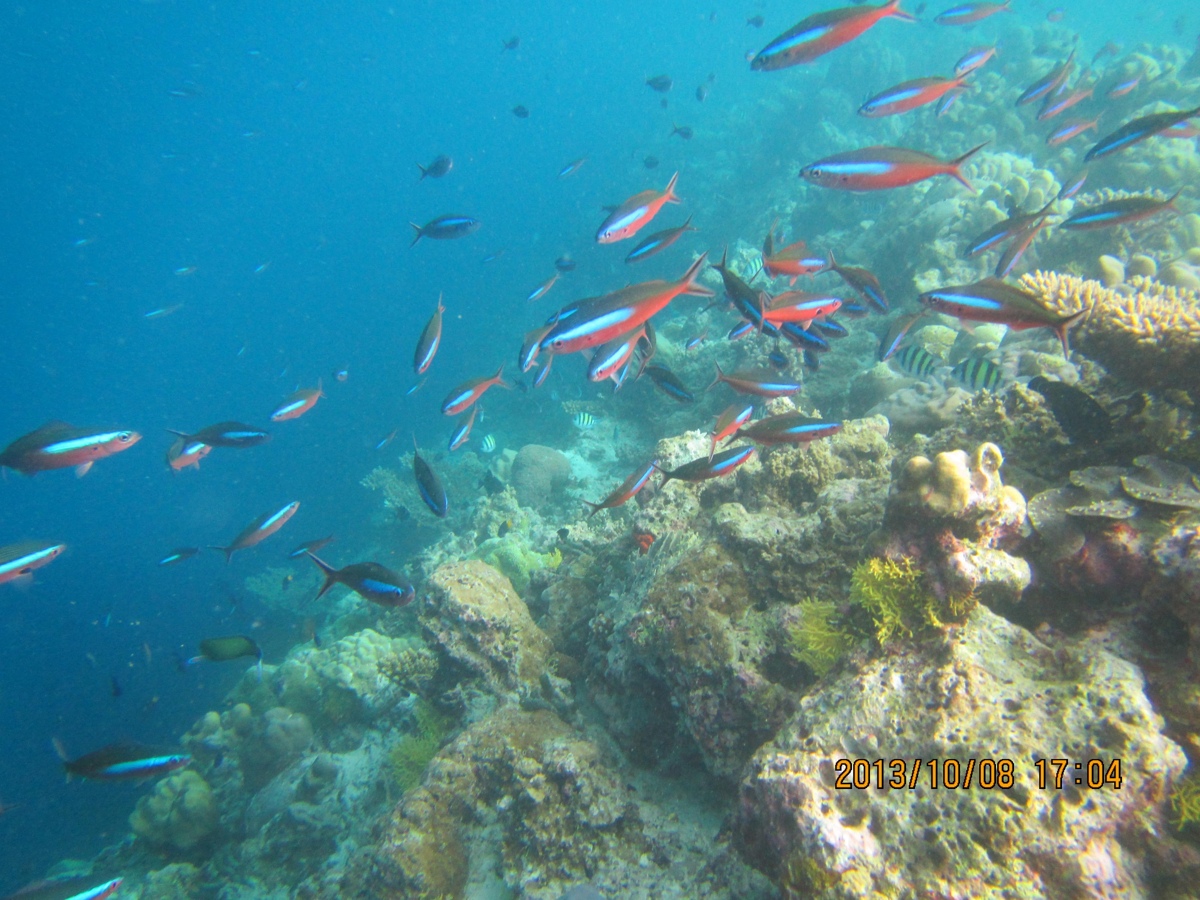 壁纸 海底 海底世界 海洋馆 水族馆 桌面 4000_3000图片