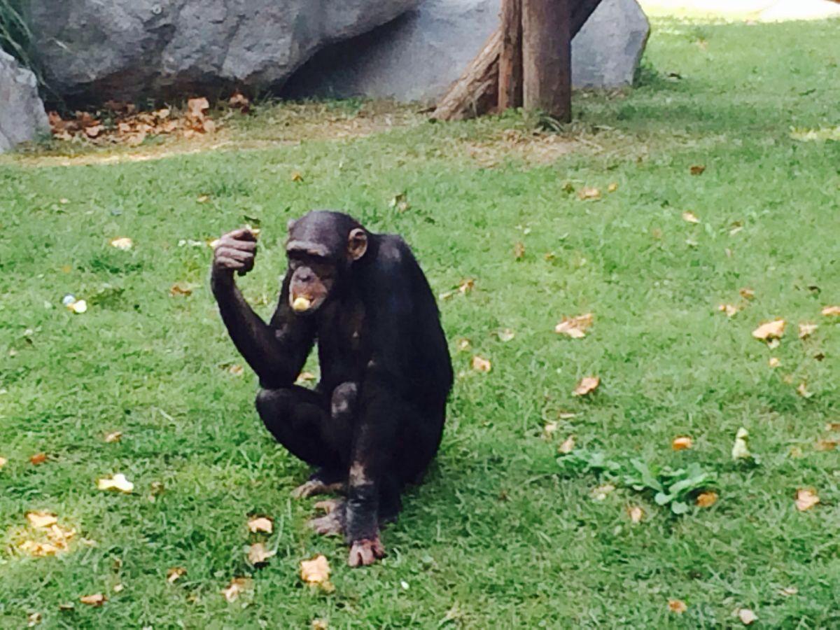 【携程攻略】上海上海动物园适合家庭亲子旅游吗,上海