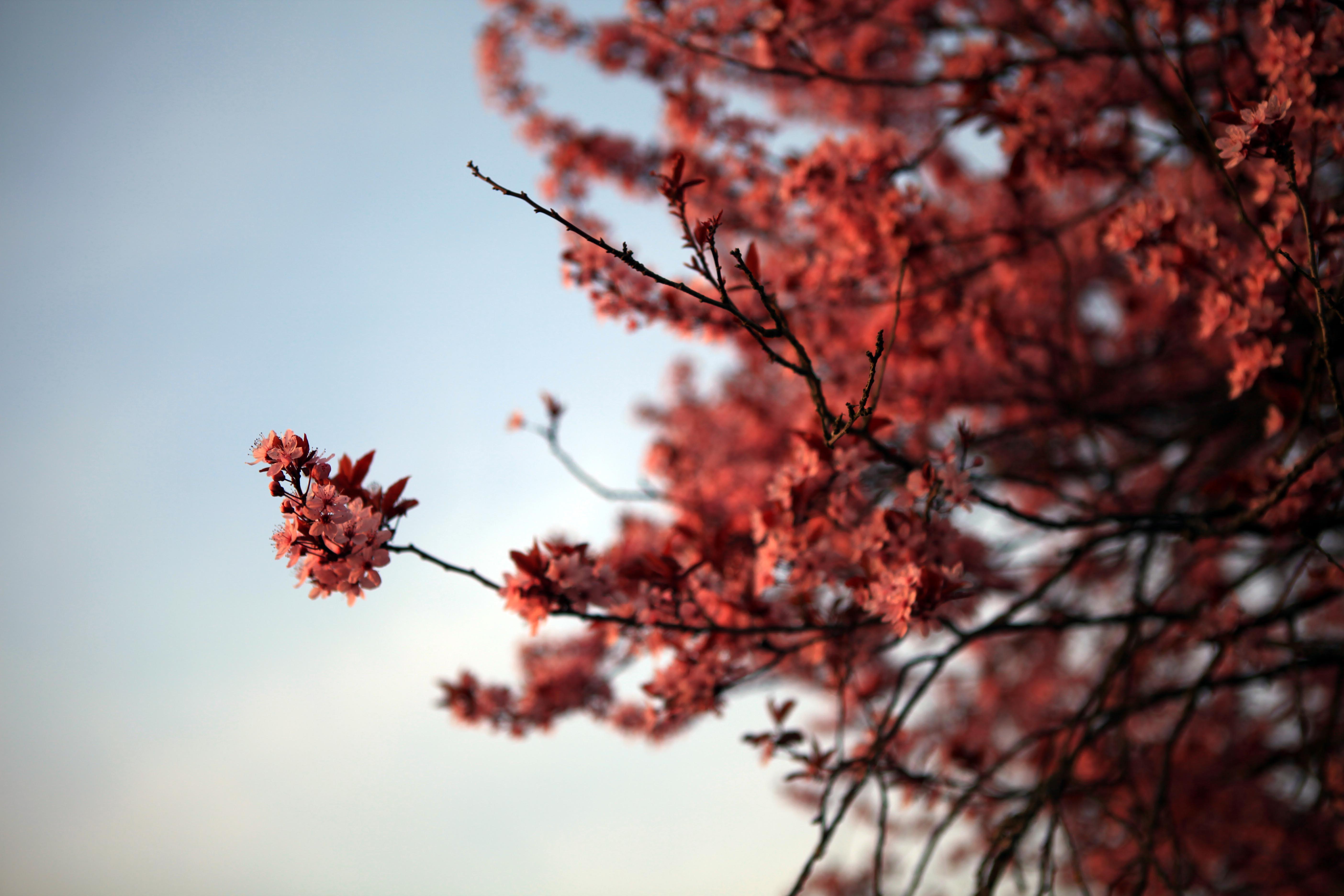 春暖花开欧洲行(超多照片,布拉格和琉森超美,申精)
