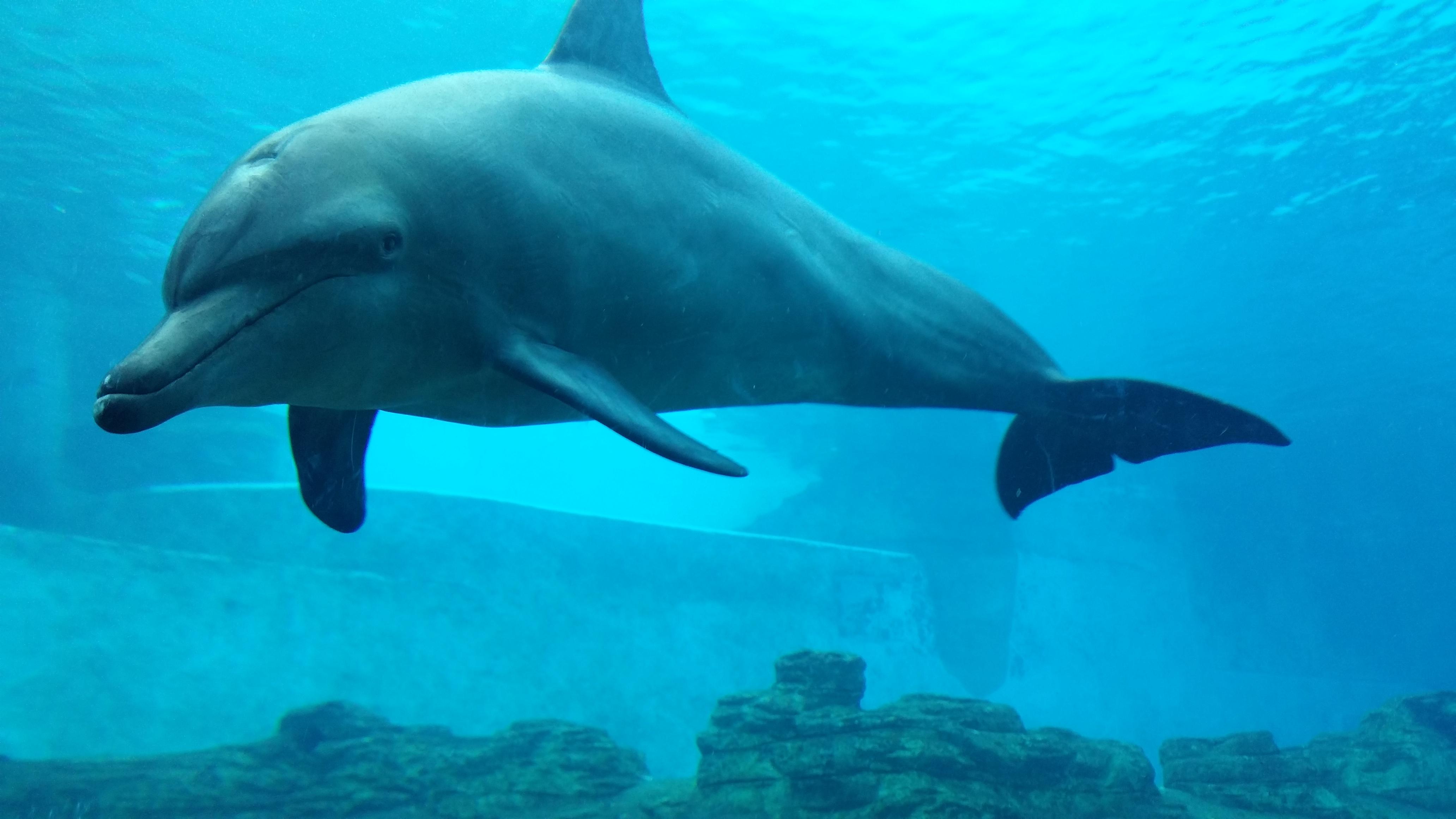 壁纸 动物 海洋动物 鲸鱼 桌面 4128_2322