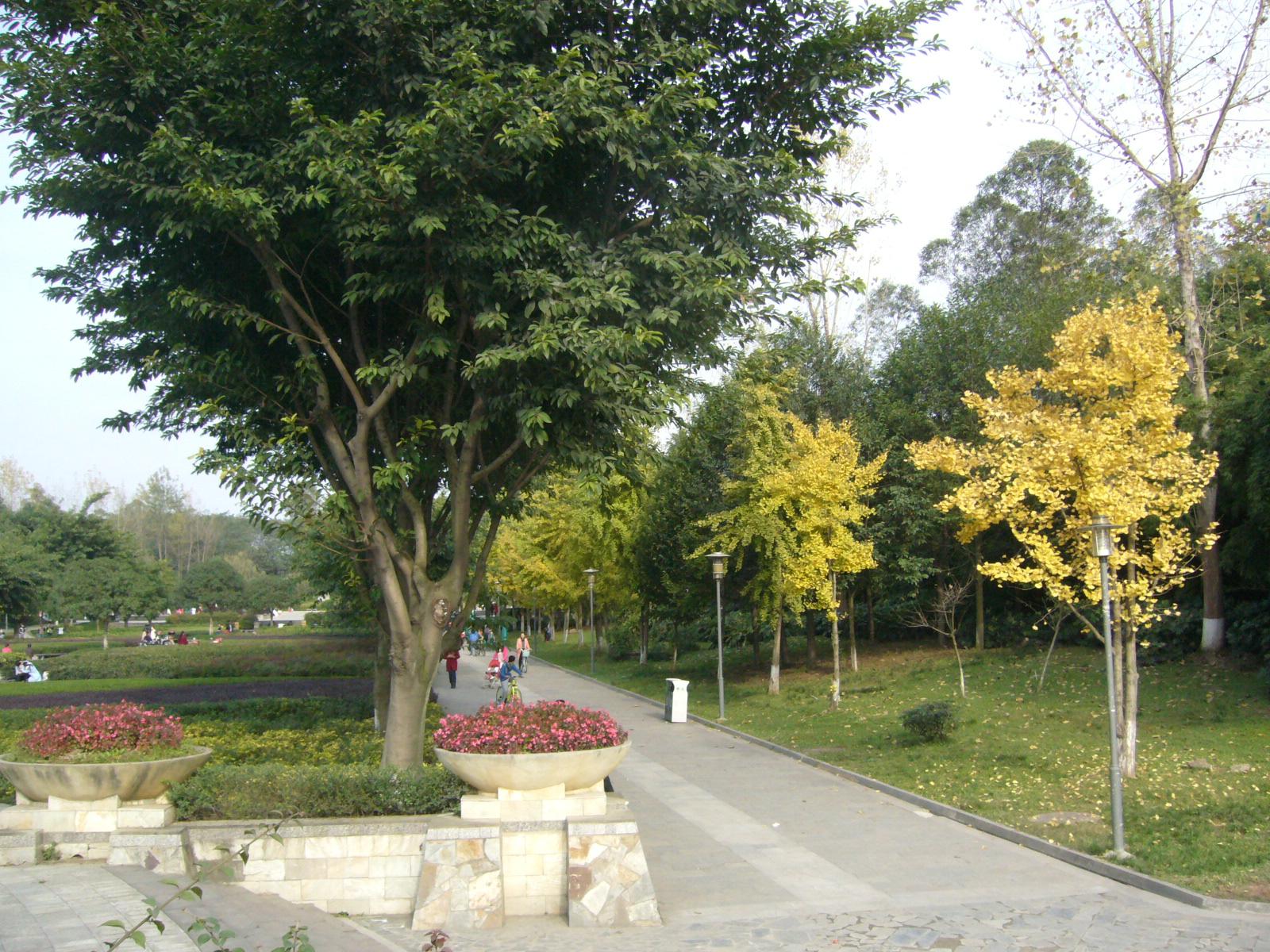 三圣花乡,红砂村--成都幸福梅林,花乡农居快游