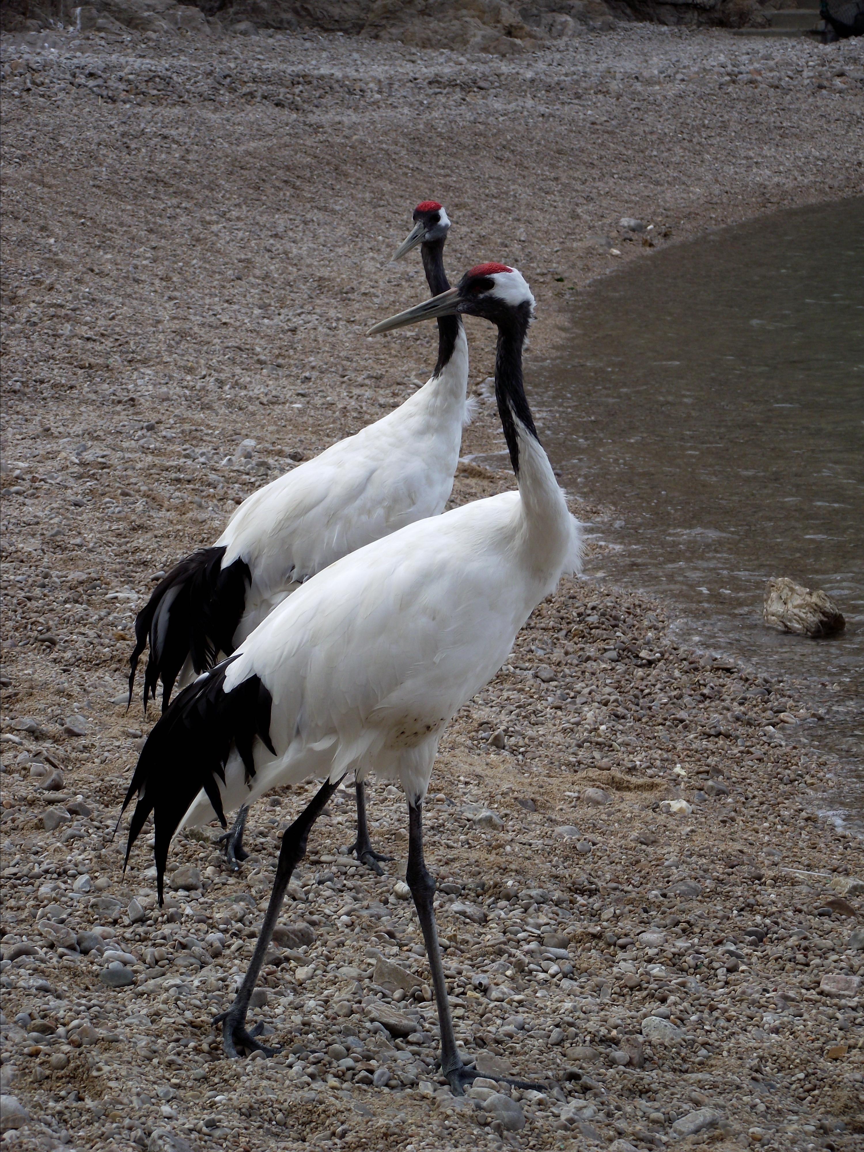 威海海驴岛,鸟的天堂