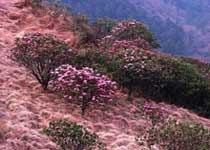神农顶国家自然保护区