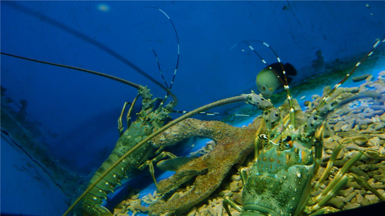 壁纸 海底 海底世界 海洋馆 水族馆 桌面 1280_720