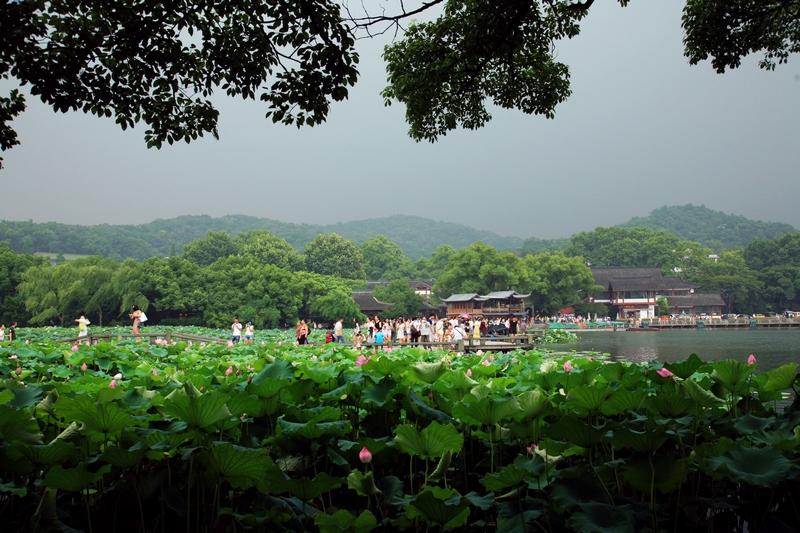 夏天的杭州,曲院风荷的西湖风景