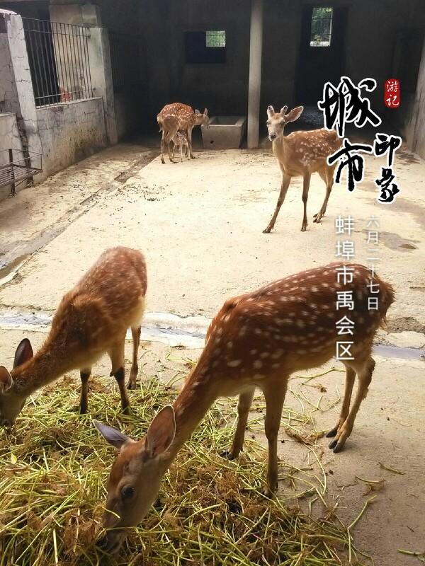 张公山动物园