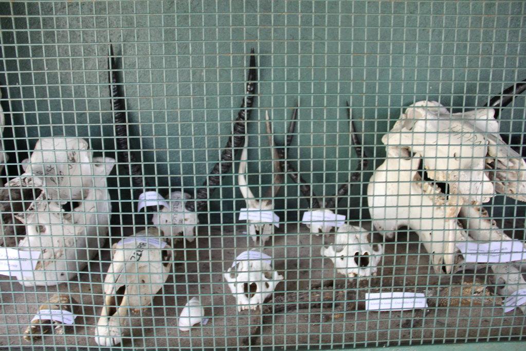南非动物骨头首饰