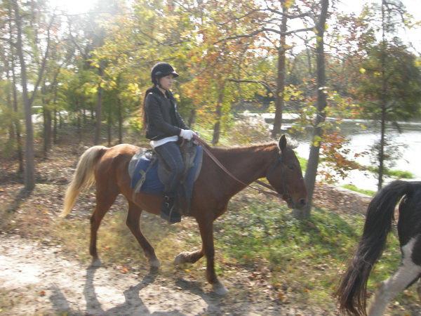 骑马奔驰带来的全身振动,比静态按摩效果要好,而且能增强心肺功能.