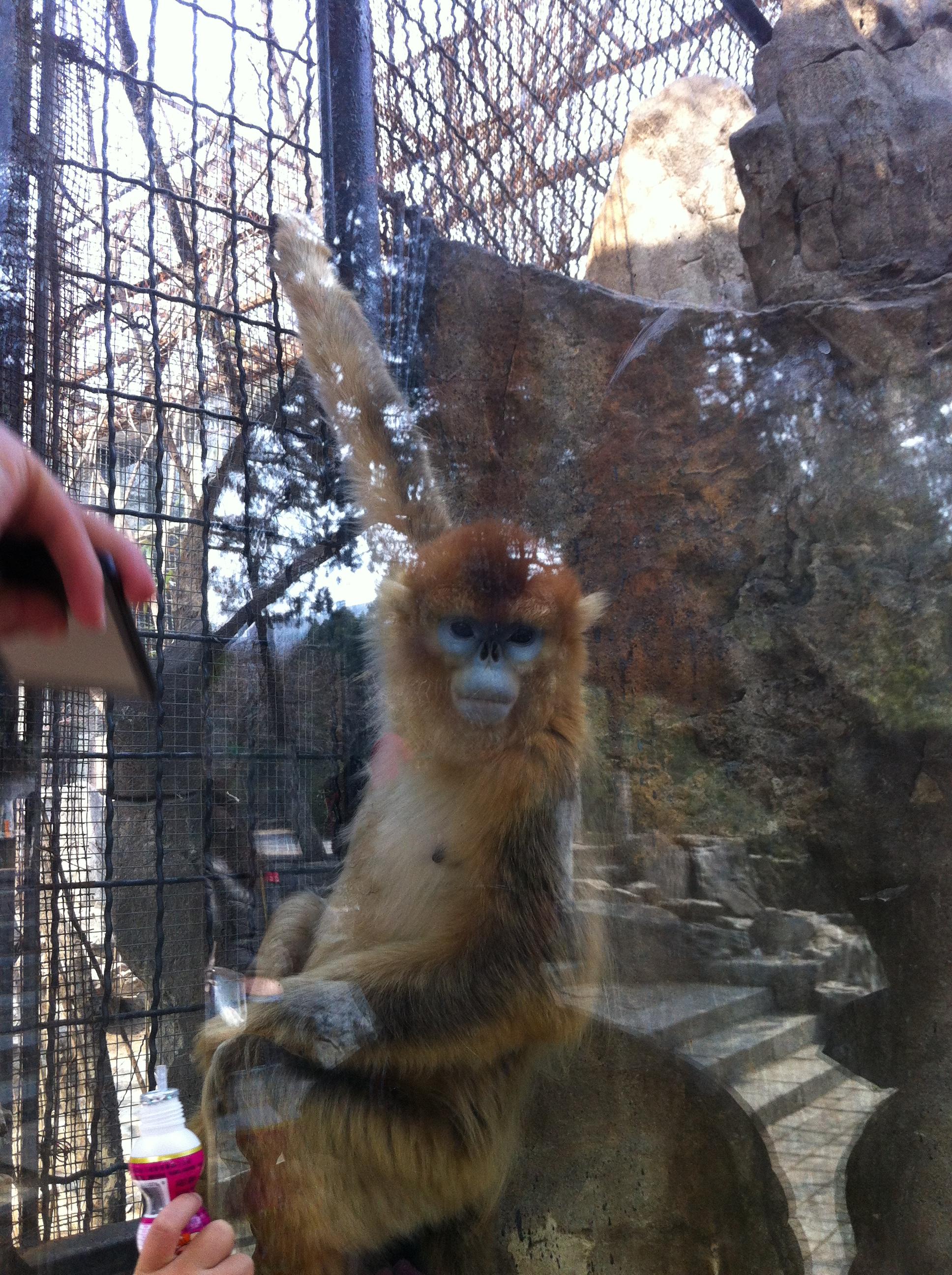 我在济南动物园欣赏可爱的动物们