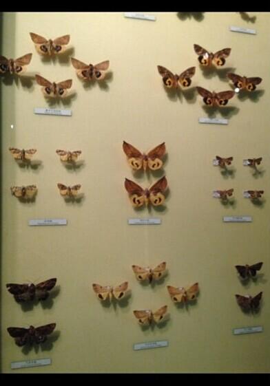 中国动物博物馆