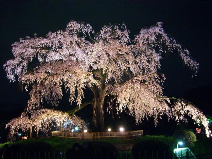 札幌圆山公园好玩吗