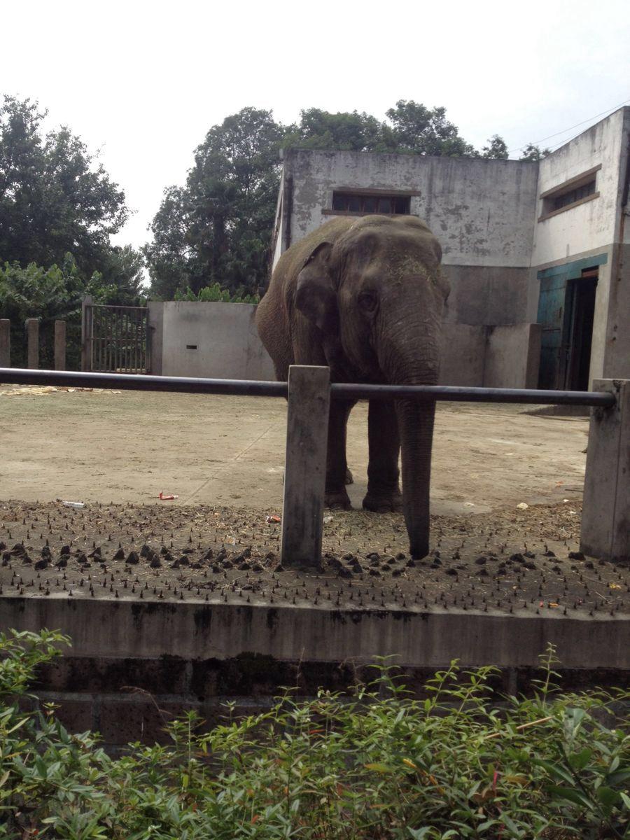 成都动物园,成都成都动物园攻略/地址/图片/门票