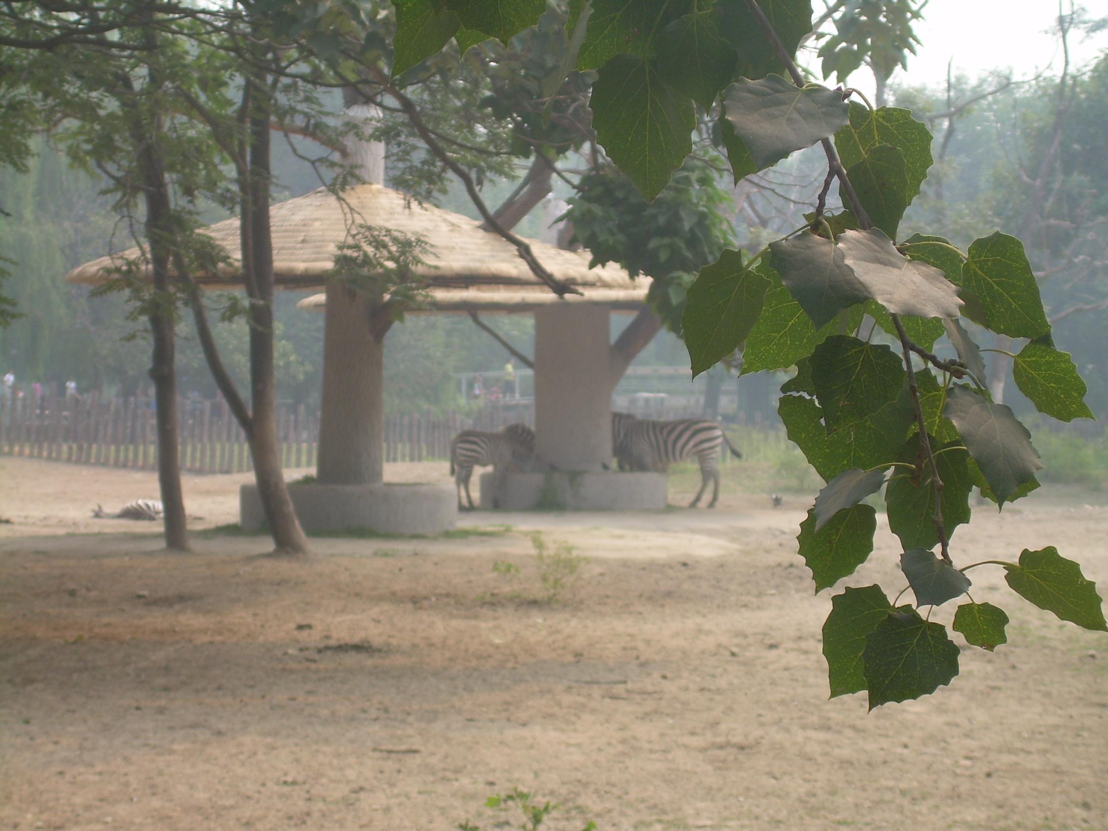 动物园看鸵鸟和斑马