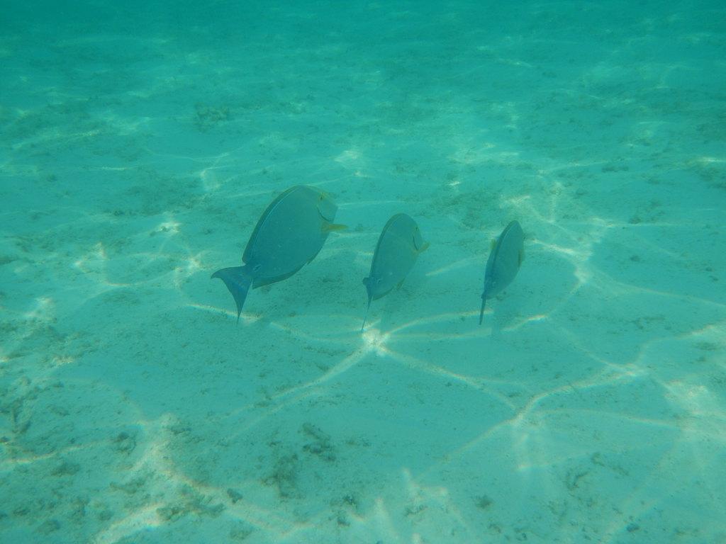 命中注定的缘分——马尔代夫蜜月岛之行