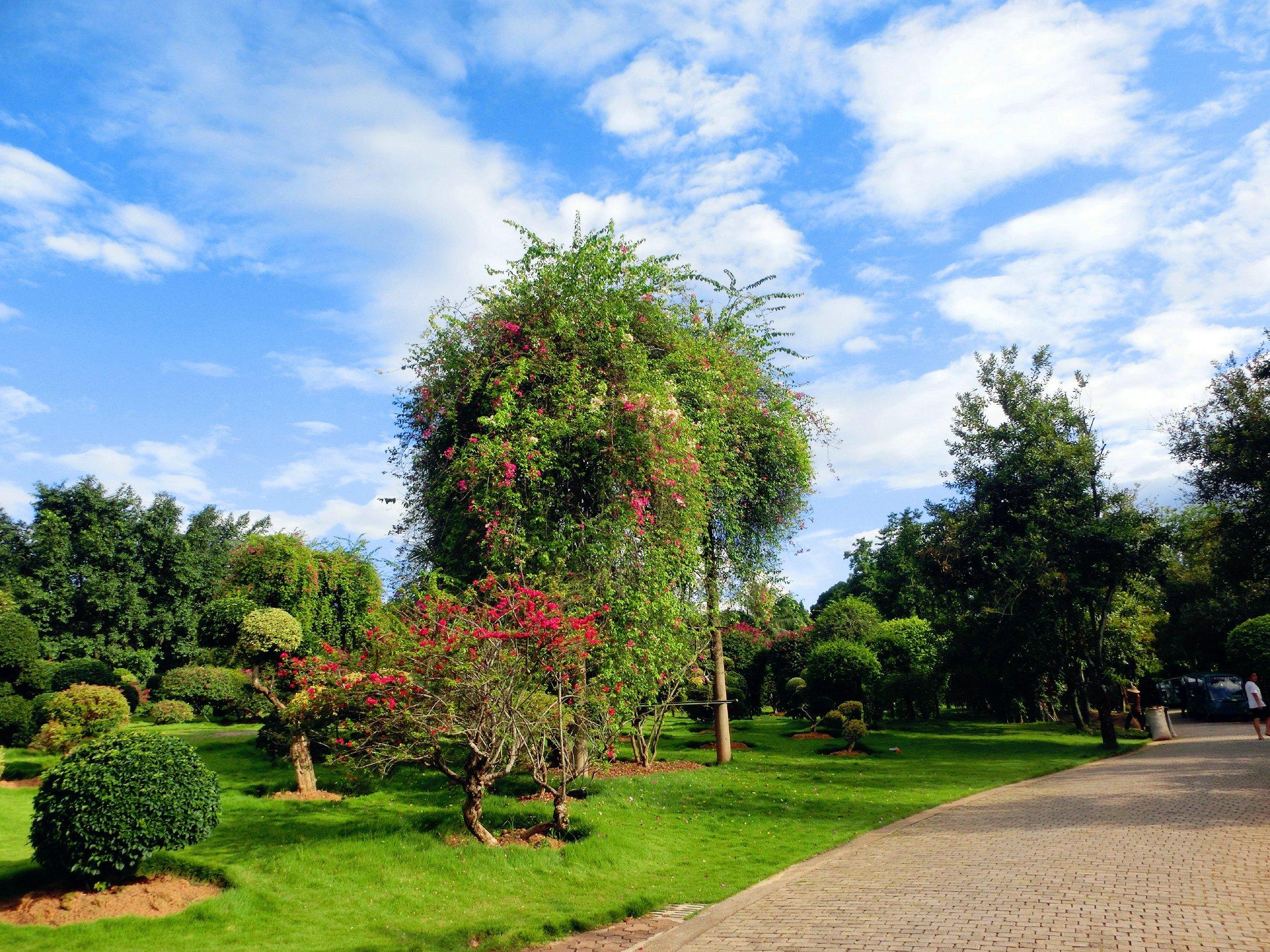 园_专线游热带花卉园——美图来袭,一次让你看个够