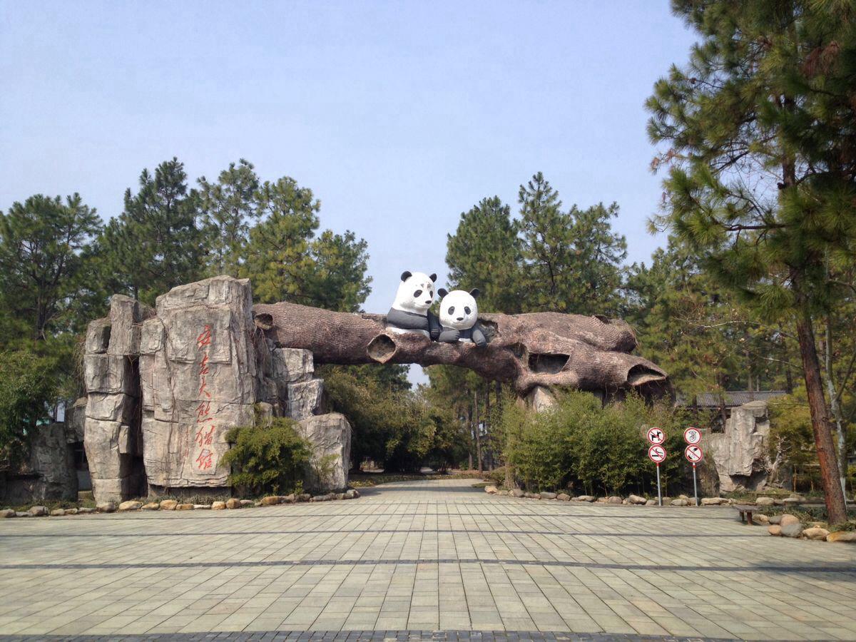 这让我想起大连动物园的大熊猫,可怜只能吃已经没有绿色的干竹子,而