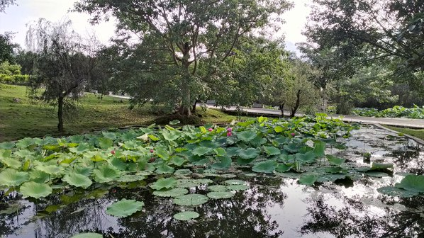 2012贵州暑假避暑亲水西瓜三口6日逍遥自助游摔视频一家图片